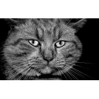 Серый кот - скачать картинки и рисунки для рабочего стола