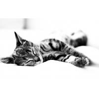 Спящий кот - обои для большого рабочего стола и картинки