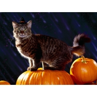 Кошкин праздник - картинки и фоны для рабочего стола windows
