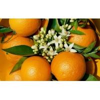 Красивые апельсины - новейшие обои и фото