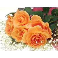 Рыжие розы - обои для рабочего стола