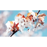 Весенние цветочки - картинки на рабочий стол и обои