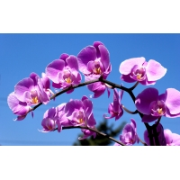 Летние цветы - бесплатные обои на рабочий стол и картинки