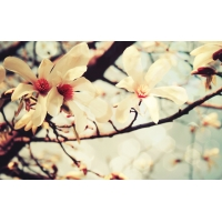 Цветы - красивые обои на рабочий стол