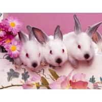 Крольчата обои (2 шт.)
