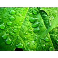 Дождь обои (11 шт.)