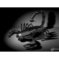 Скорпион обои (4 шт.)
