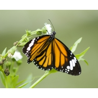 Бабочка новые обои, новые картинки