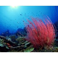 Подводное царство фото и обои для рабочего стола