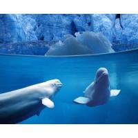 Дельфины красивые обои и фото установить на рабочий стол
