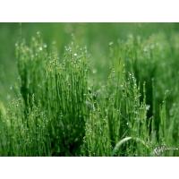 Трава обои (6 шт.)