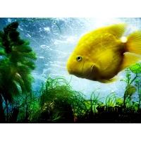 Рыбы обои (6 шт.)