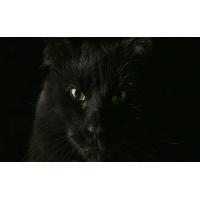 Черный кот картинки, обои на рабочий стол широкоформатный