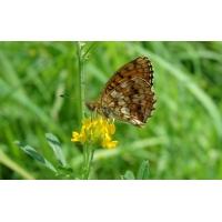 Бабочка красивые обои на рабочий стол