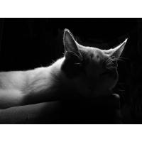 Кот в тени скачать обои для рабочего стола и фото