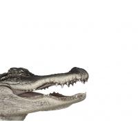 Крокодил картинки и заставки на рабочий стол