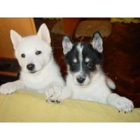 Собачки обои и картинки на рабочий стол бесплатно