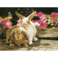 Bunnies In Petunias, Lesley Harrison скачать картинки на рабочий стол и обои
