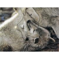 A Tender Moment, Lesley Harrison бесплатные картинки на рабочий стол и обои