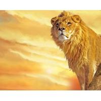Лев, Скачать обои хищных животных