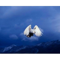 Картинки птичек скачать бесплатно, фоновые рисунки на рабочий стол