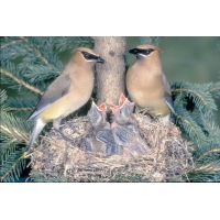 Птицы обои (16 шт.)