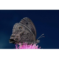 Заставки обои бабочки, картинки, скачать фоновый рисунок рабочего стола