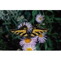 Новые картинки, для рабочего стола бабочки, скачать