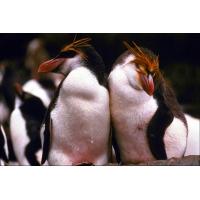 Пингвины на картинке, скачать, картинки и обои на креативный рабочий стол
