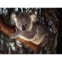 Картинки животных скачать бесплатно, скачать картинки бесплатные для компа