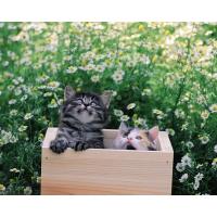 Картинка двух котят на компьютер, красивое фото на рабочий стол и картинки