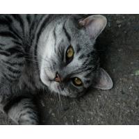 Картинка кошки  на компьютер, бесплатные обои на рабочий стол и картинки