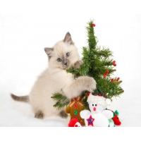 Картинка котёнок у ёлки на компьютер, обои и фото на красивый