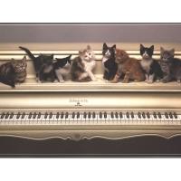 Коты на пианино - лучшие обои для рабочего стола и картинки