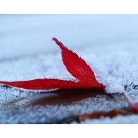 Красный листочек скачать обои для рабочего стола и картинки