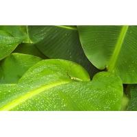 Большие мокрые листья бесплатные картинки на комп и фотки для рабочего стола