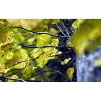 Желтенькие листья скачать картинки бесплатные для компа