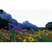 Летний пейзаж бесплатные обои и картинки
