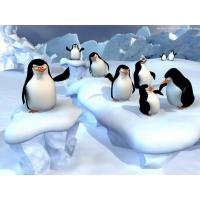 Пингвины обои (4 шт.)