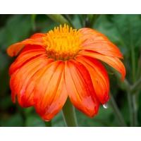 Яркий цветок картинки - фон для рабочего стола