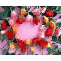 Разбросанные розы красивые обои и фото установить на рабочий стол