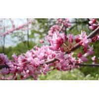 Розовые цветы обои для большого рабочего стола и картинки
