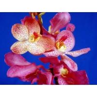 Орхидея новейшие обои на рабочий стол и картинки