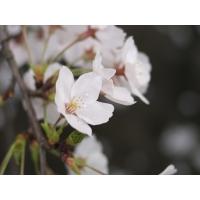 Нежные цветы скачать фото на рабочий стол и обои