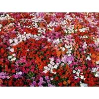 Море цветов клевые картинки - тюнинг рабочего стола