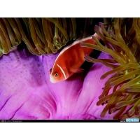 Розовая рыбка картинки и рисунки для рабочего стола скачать бесплатно
