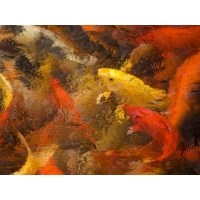 Рыбы картинки и обои, смена рабочего стола