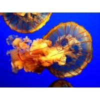 Медуза большие картинки на рабочий стол и обои