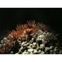 Коралл скачать обои, гламурный рабочий стол