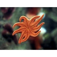 Морская звезда картинки - это супер рабочий стол